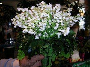 Bouquet28